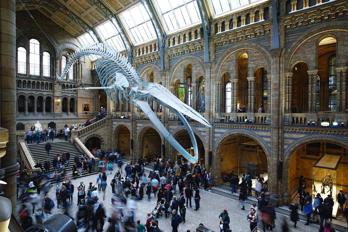 interactive museum concept